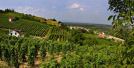 Szlovénia borászata