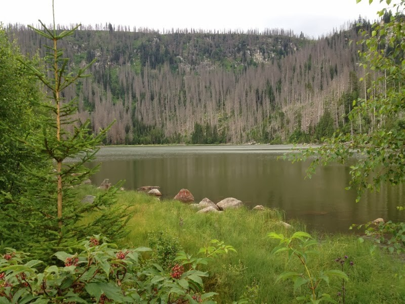 Šumava Nemzeti Park